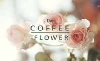 the coffee flower